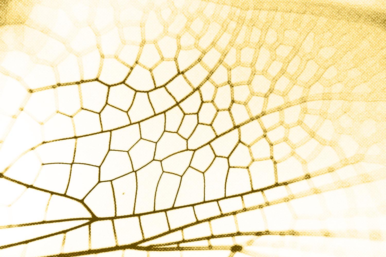 Antiriciclaggio: adeguata verifica per gli operatori non finanziari